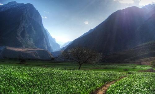 Voyages Yunnan - Arbre
