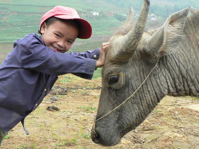 Le meilleur ami du riziculteur du Yunnan