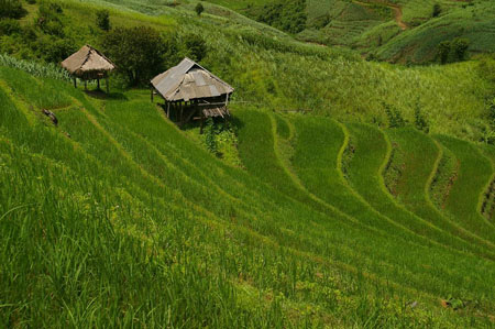rizières du yunnan