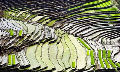 rizière yunnan