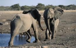vallée des elephants sauvages