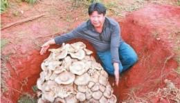 yunnan champignon