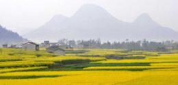 L'économie florissante du Yunnan