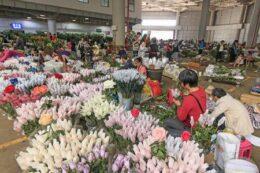 Le Centre international de vente aux enchères de fleurs de Kunming